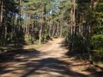 drogi_lesne-5